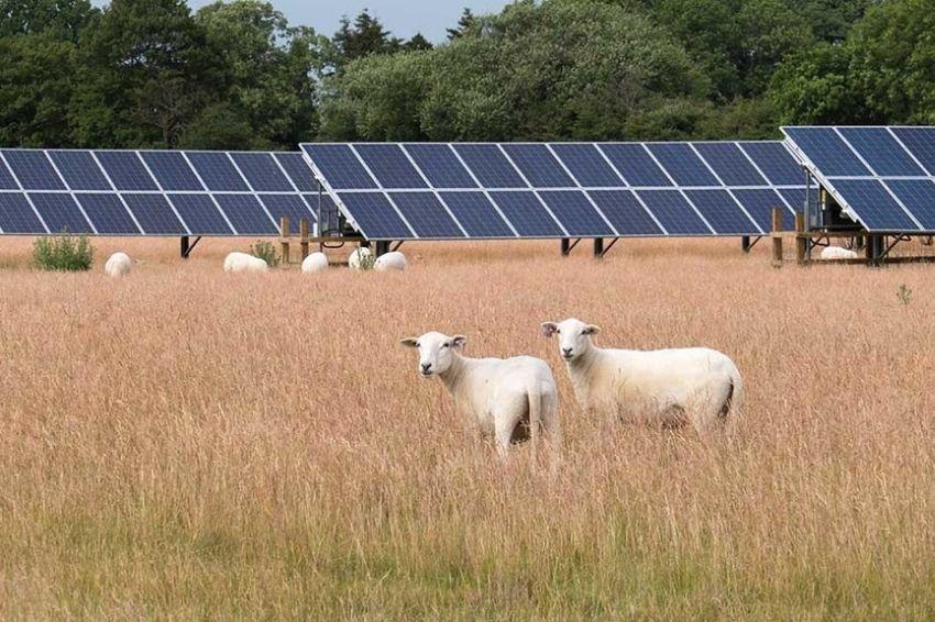 Energia solar no agronegócio impulsiona a transição energética